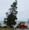 Truck_and_trees_2