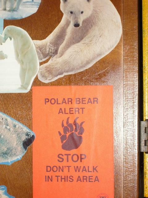 Polar_bear_alert_2