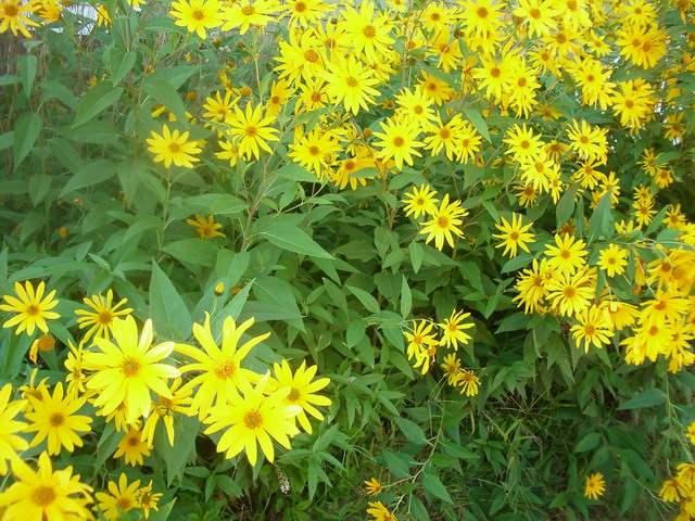 Yellowflowers